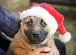 6 Things You Must Do if a New Pet is on Your Child's Wish List