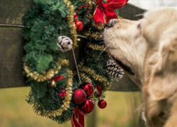 Safety Tips for Pets During the Holidays