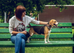 Why Choice Matters When Training Your Dog