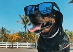How To Keep Your Pet Safe In The Summer Heat