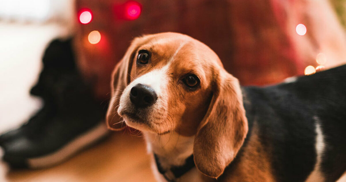 Is Grain-Free Pet Food Safe?