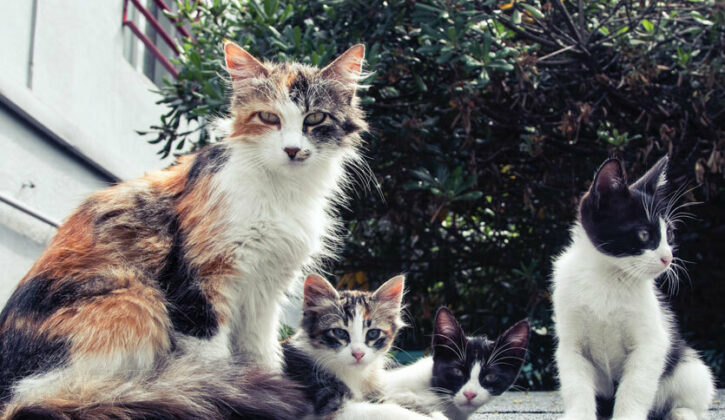 Why You Should Spay Your Female Cat